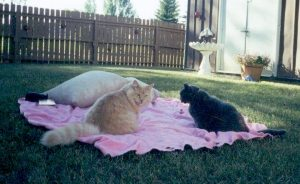 Carmel & his sister Salt (passed away 2009) enjoying a picnic